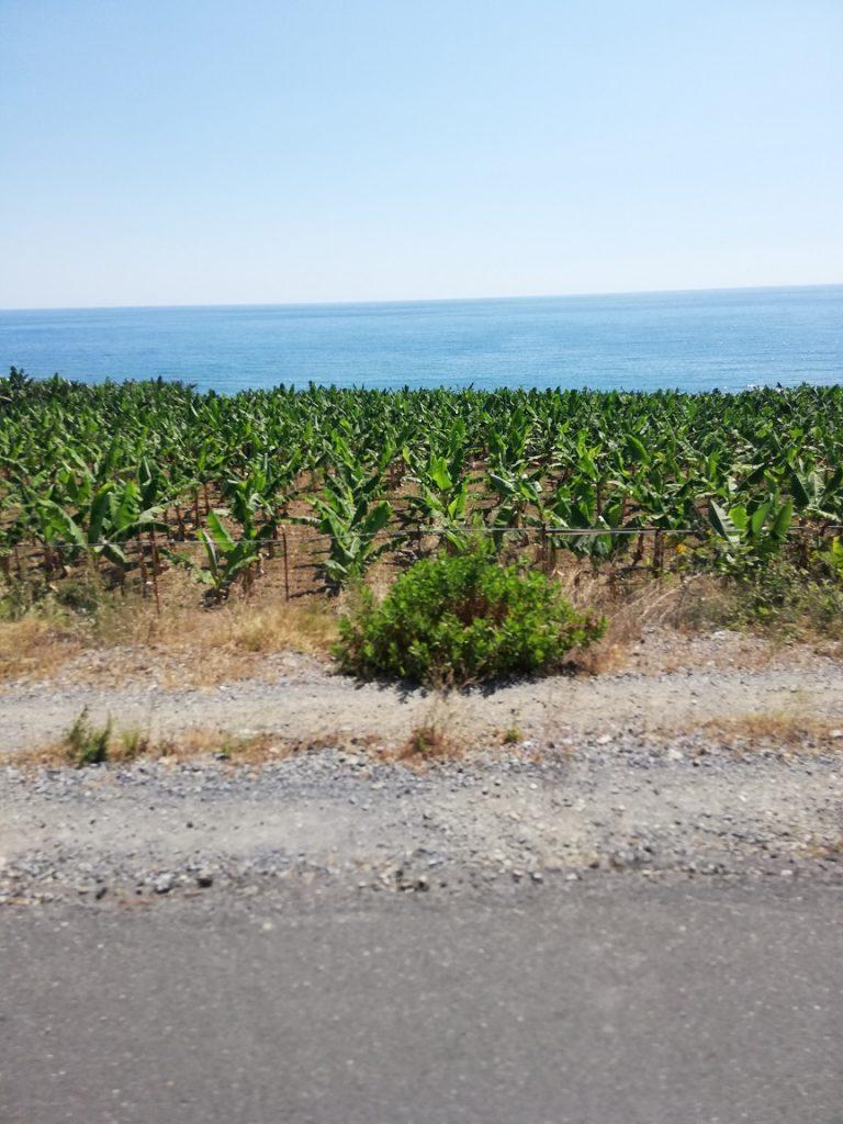 Méditerranée Turquie Bananiers